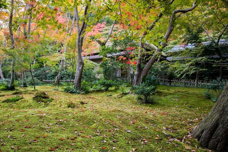 Gio-ji Temple in Autumn
