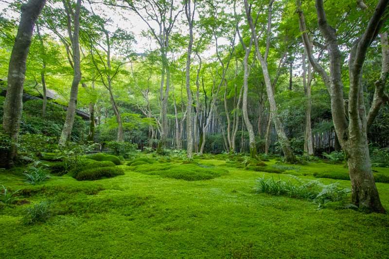Gio-ji Temple Garden in Spring