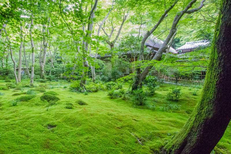 Gio-ji Temple in Spring