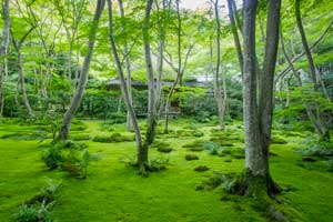 Featured Image for Gio-ji Temple